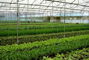 Lãnh đạo tỉnh khảo sát địa điểm dự kiến đầu tư 2 dự án nông nghiệp công nghệ cao