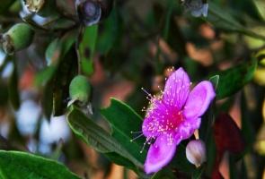 Màu hoa thương nhớ