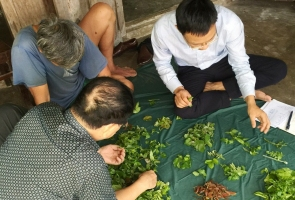 Nghiên cứu tổ hợp các loại thực vật làm rau ăn và lá uống ở Cù Lao Chàm