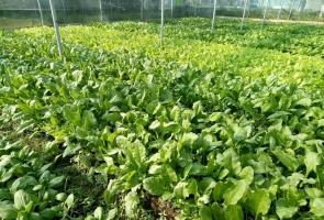 Thêm 8 sản phẩm nông nghiệp OCOP đạt 3, 4 sao cấp tỉnh