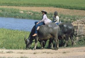 Miền đất Quảng Nam năm 1991 – 1992 qua ảnh của Hans-Peter Grumpe