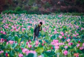 Vẻ đẹp khó cưỡng của đầm sen lớn Trà Lý ở Quảng Nam